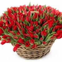 Корзина 151 красный тюльпан R293